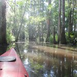 Paddling along an old irrigation canal lined with cypress.