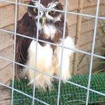Lovely lady owl
