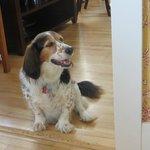 Katie, the four-legged greeter