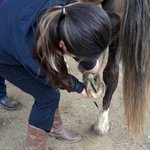 cleaning hooves - horse camp