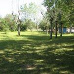 Verde ed alberi