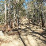 4WD Mt Tamborine
