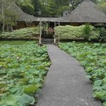 The pathway leading to our room - Bale Adat Lotus Pond View (409)