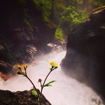 Lone flower at the waterfall.