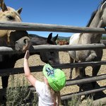 Playing with the horses