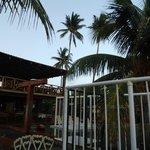 Terrazas con palmeras