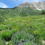 Wildflowers north of Crested Butte