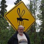 Los mosquitos impresionan.