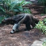 Ant eater, so cute