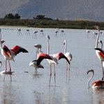 fenicotteri rosa nel lago salato