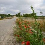 Cami de s'Olivar wild flowers