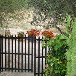 Gate and geraniums