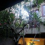 Overhanging gardens