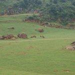 Zona de los Elefantes