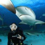 Shark Feeding - Bahamas