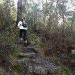 steep trail up, Booroomba Rocks trail