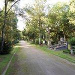 cmentarne aleje
