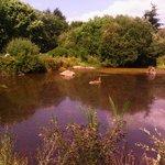 Peaceful walk round the lake
