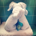 Cute towel animal holding soap (Nice shampoo Conditioner and Lotion provided in travel sizes)