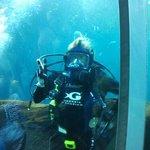 Staff in Large Marine Life Aquarium