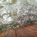 feeding the fish on the raft