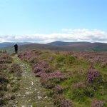 Wicklow Scenic Walks