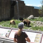 feeding the bears to get the up from their nap