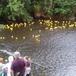 The duck race!
