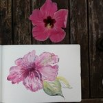 urikuri hibiscus from matava