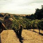 The beautiful hillsides in Santa Ynez valley
