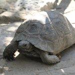 tortue cour intérieur