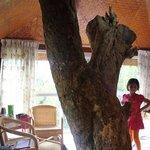Tree @ Tree House