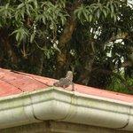 sur le toit du bungalow