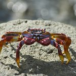 colourful crab