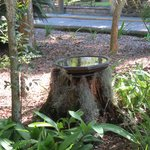 Bird bath on grounds.  Lovely landscaping.