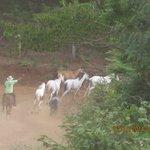 Herd of horses passing the Monkey Bar