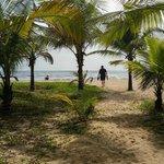 Beach through the coconut trees