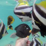 Fish feeding lagoonarium