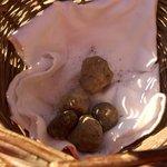 Successful truffle hunt!