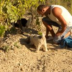 The truffle hunter and the truffle-hunting dogs. Super impressed!
