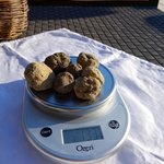 6 truffles found in a matter of an hour... not bad!