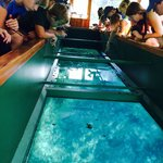 Clear water from the glass bottom boat