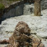 Another petrified tree trunk