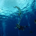 Fun for both divers and snorkelers!