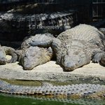 Bit cramped loads of crocodiles in small space but thought this was cute ^^