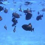 Molokini fish