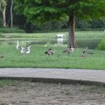 some waterfowl around the lake