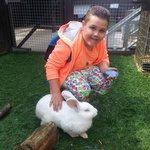 petting the rabbit inside its enclosure.