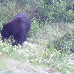 one of several bears