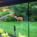 Wildlife at your window